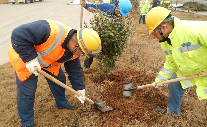 Planting Trees for a Greener Community